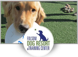 Jake Romero<br>Folsom Dog Resort